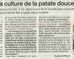 19 août 2013 : culture patate douce